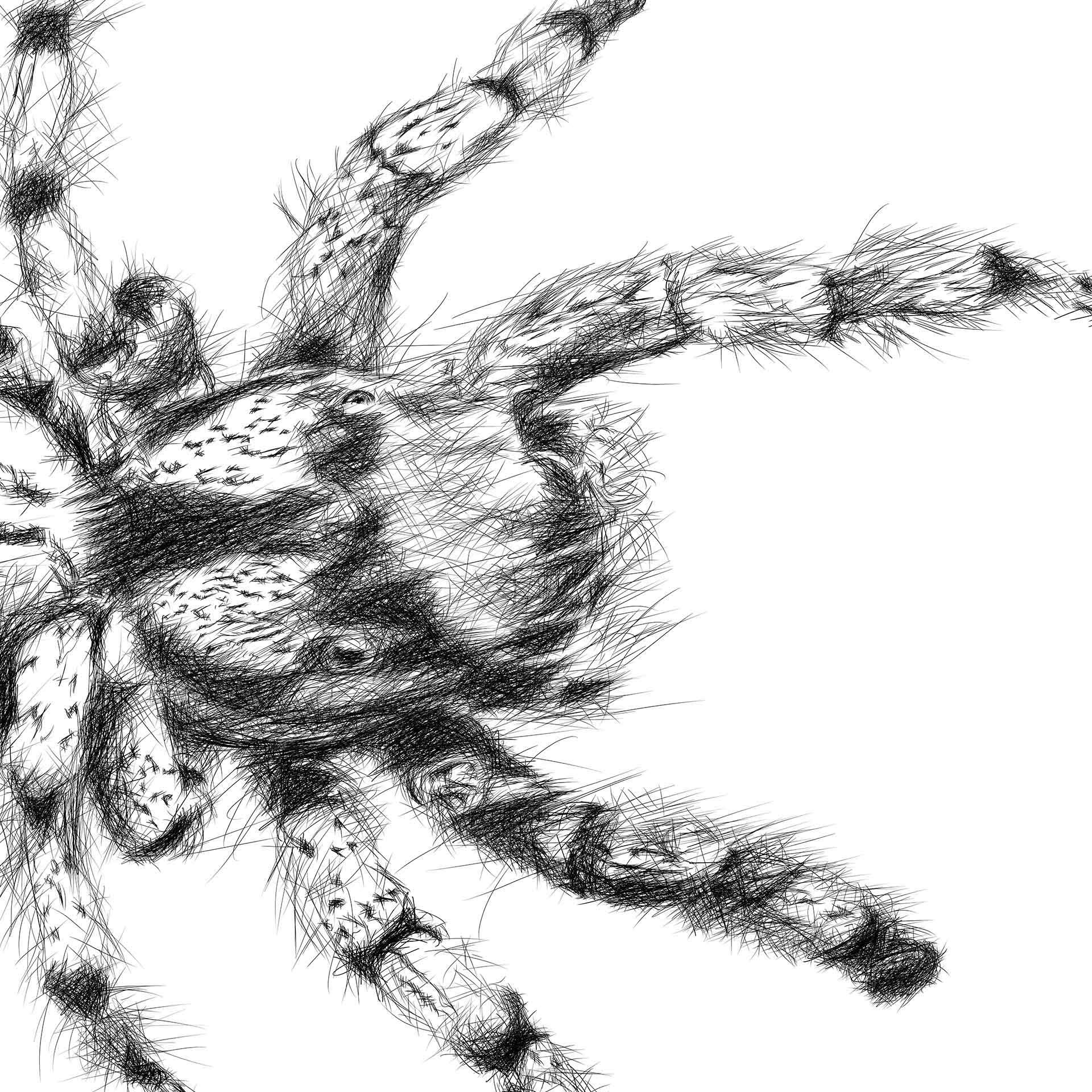 Hairy spider digital pencil line drawing ציור בעיפרון דיגיטלי עכביש closeup1