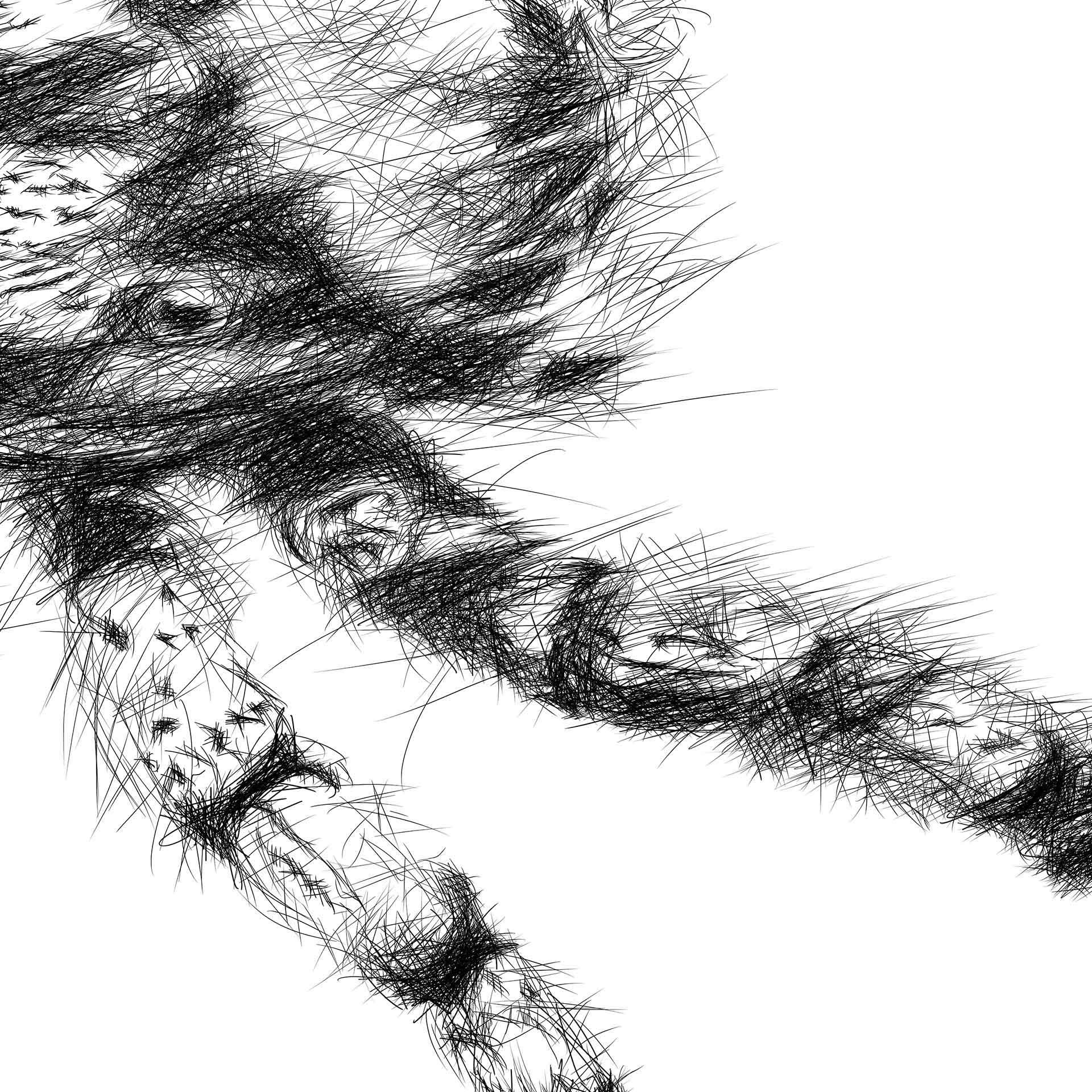 Hairy spider digital pencil line drawing ציור בעיפרון דיגיטלי עכביש closeup2