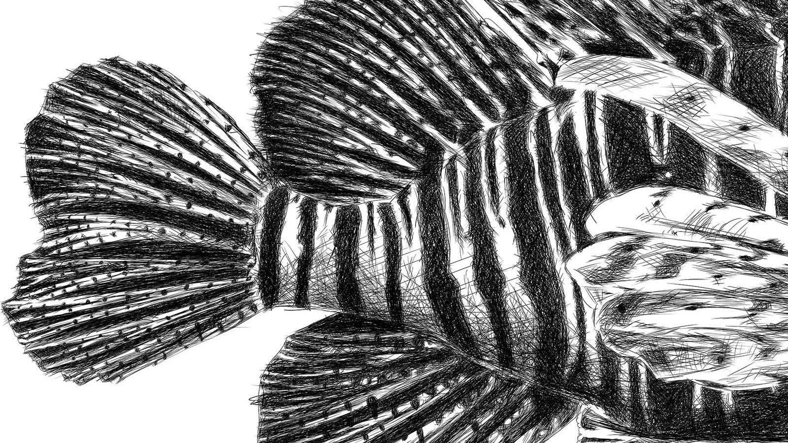 Lion fish illustration