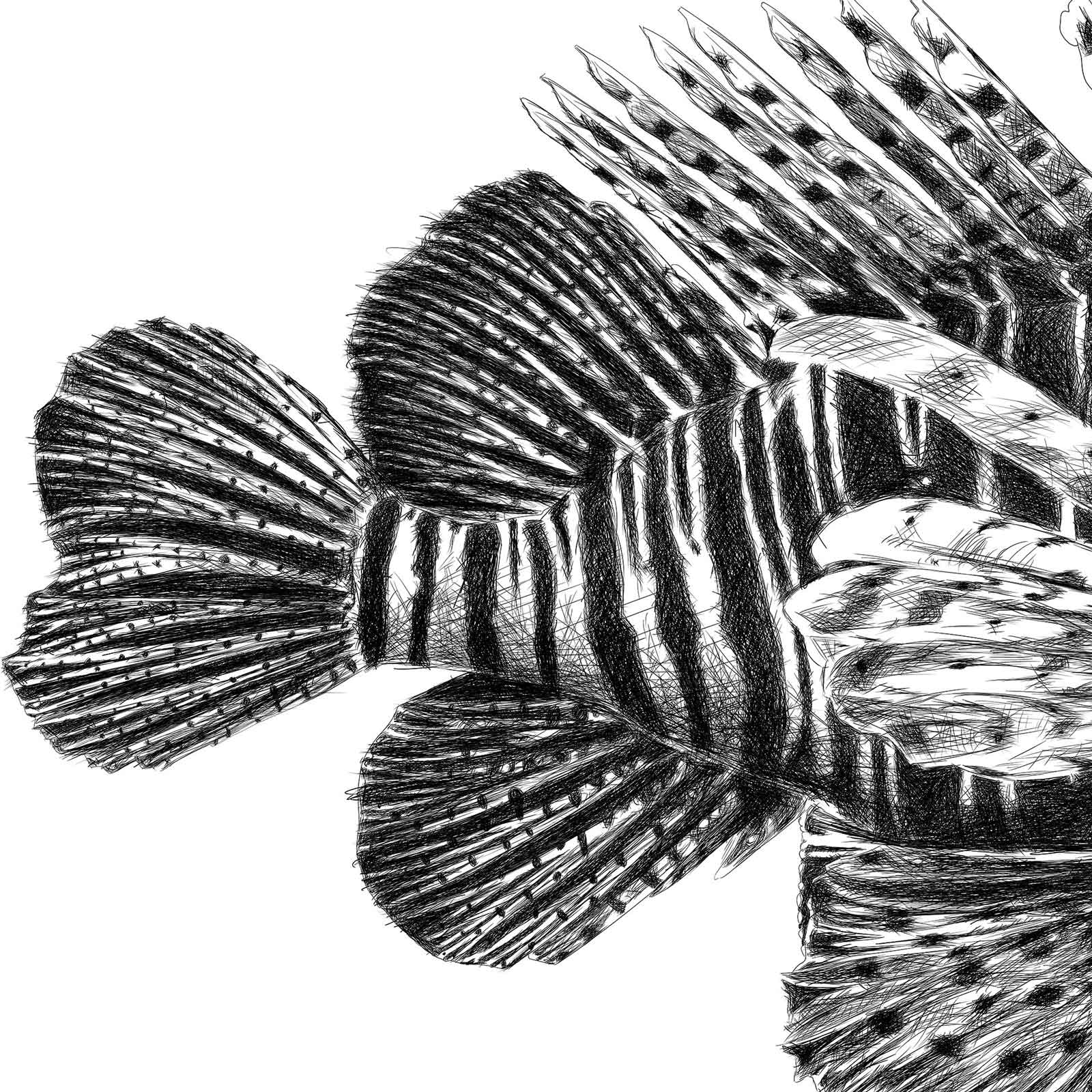 Lion fish illustration
